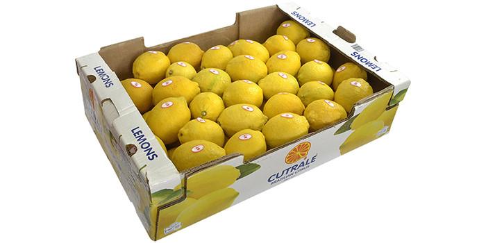 redfrutas_limão_siciliano_DSC0019